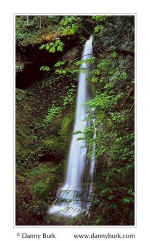 Picture: Marymere Falls, Olympic National Park, Washington