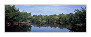 Picture: Mangroves, Ding Darling National Wildlife Refuge, Sanibel Island, Florida