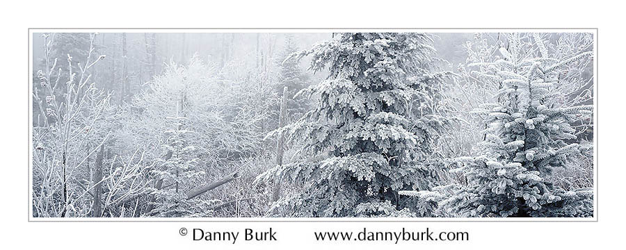 Picture: Rime ice storm, Clingman's Dome, Great Smoky Mountains National Park, Tennessee