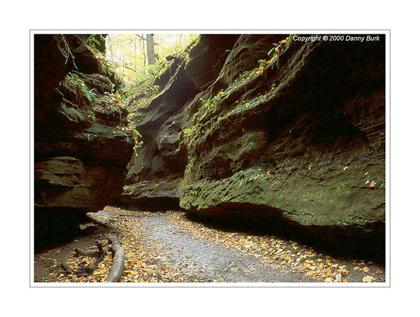 Picture: Canyon, Turkey Run State Park, Indiana