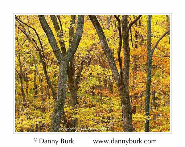 Picture: Autumn foliage, Turkey Run State Park, Indiana